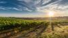 visite vigne medoc